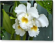 Acrylic Print featuring the photograph White Corsage Orchid Trio by Cindy McDaniel