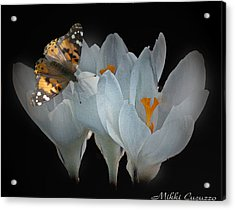 White Crocus With Monarch Butterfly Acrylic Print by Mikki Cucuzzo