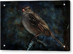 Acrylic Print featuring the photograph White-crowned Sparrow by Barbara Manis