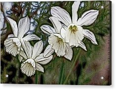 White Daffodil Flowers Acrylic Print by Photographic Art by Russel Ray Photos