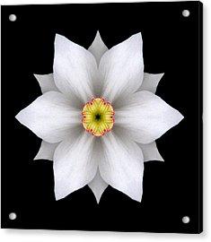 White Daffodil II Flower Mandala Acrylic Print by David J Bookbinder