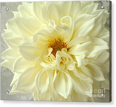 Acrylic Print featuring the photograph White Dahlia by Olivia Hardwicke