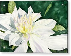 White Dahlia - Transparent Watercolor Acrylic Print