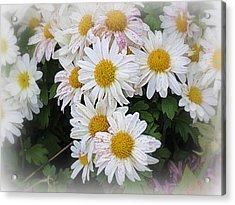 White Daisies Acrylic Print by Kay Novy