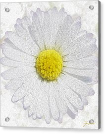 White Daisy On White Acrylic Print by Jon Neidert