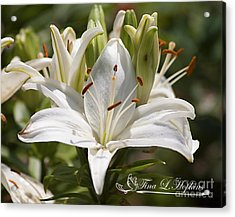 White Day Lily 20120615_36a Acrylic Print