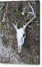 White Deer Skull In Grass Acrylic Print