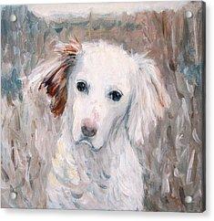 White Dog # 2 Acrylic Print