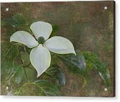 White Dogwood Acrylic Print by Angie Vogel
