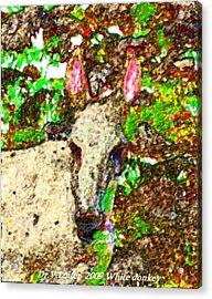 White Donkey-owner Of Hills Acrylic Print by Dr Loifer Vladimir