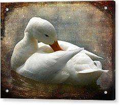 White Duck Acrylic Print by Barbara Orenya