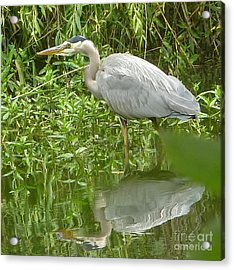 Acrylic Print featuring the photograph White Egret Double  by Susan Garren