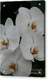 Acrylic Print featuring the photograph White Elegance by Mary Lou Chmura