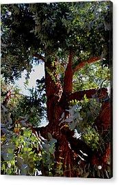 White Eucalyptus 2 Acrylic Print