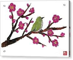 White Eye And Japanese Plum Tree Acrylic Print by Keiko Suzuki