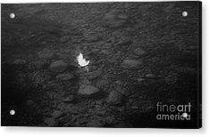 White Feather Acrylic Print by Michelle O'Neill