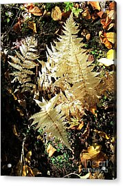 White Ferns Acrylic Print by Linda Marcille