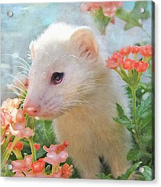 White Ferret Acrylic Print