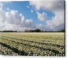 White Field Acrylic Print