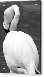 White Flamingo Acrylic Print