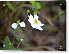 Acrylic Print featuring the photograph White Flower by Alex King