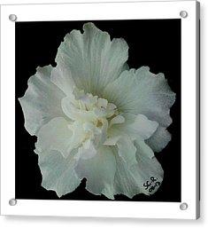 White Flower By Saribelle Rodriguez Acrylic Print by Saribelle Rodriguez