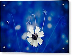 Acrylic Print featuring the photograph White Flower by Darryl Dalton