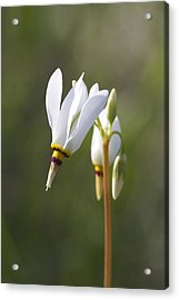 White Flower Acrylic Print by David Tennis
