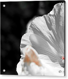 White Flower Detail Acrylic Print