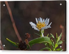 Acrylic Print featuring the photograph White Flower Dew-drops Autumn by Jivko Nakev