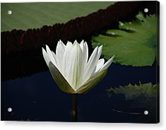 Acrylic Print featuring the photograph White Flower Growing Out Of Lily Pond by Jennifer Ancker