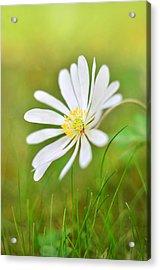 White Flower Acrylic Print by Gynt