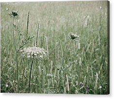 White Flower In A Meadow Acrylic Print by Rob Huntley