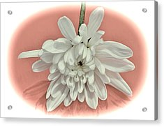 White Flower On Pale Coral Vignette Acrylic Print