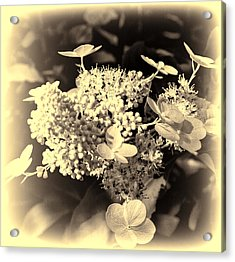 white flower SV Acrylic Print by Leif Sohlman