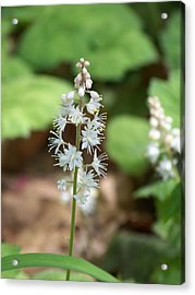 White Flowers Acrylic Print by Brittany Gandee
