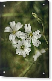 White Flowers Acrylic Print by Gynt