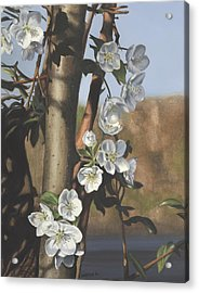 White Flowers Acrylic Print by Michele Renee