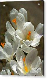 White Flowers Acrylic Print by Nur Roy