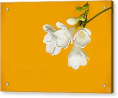 Acrylic Print featuring the photograph White Flowers On Tangerine Study by Lisa Knechtel