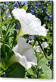 Acrylic Print featuring the photograph White Flowers by Rose Wang