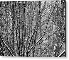 White Forest Acrylic Print by Marc Philippe Joly
