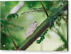 Acrylic Print featuring the photograph White Frog by Donna Brown