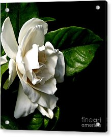 Acrylic Print featuring the photograph White Gardenia by Rose Santuci-Sofranko