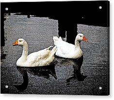 White Geese Acrylic Print