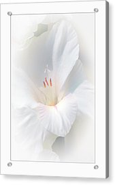 White Glad Acrylic Print