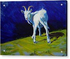 White Goat Painting Acrylic Print
