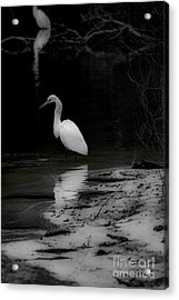 White Heron Acrylic Print by Angela DeFrias