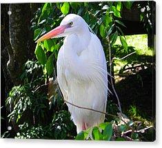 White Heron Beauty Acrylic Print by Judy Wanamaker