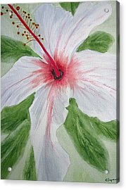 White Hibiscus Flower Acrylic Print by Elvira Ingram